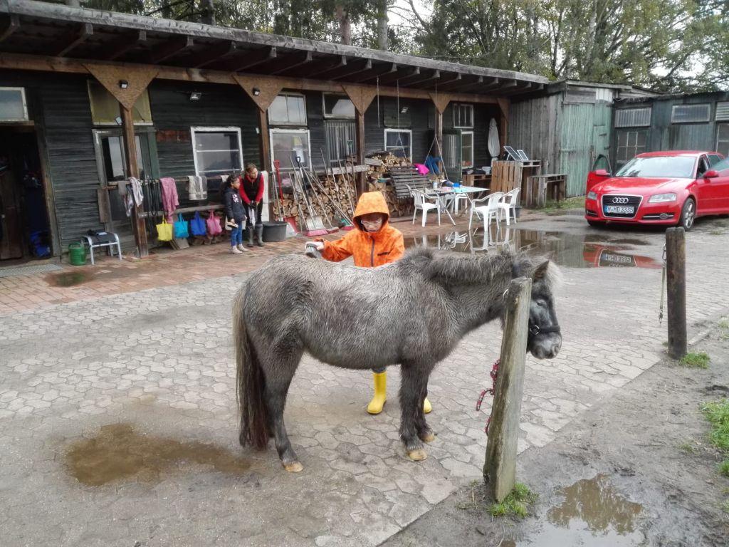 Kind striegelt ein Pferd